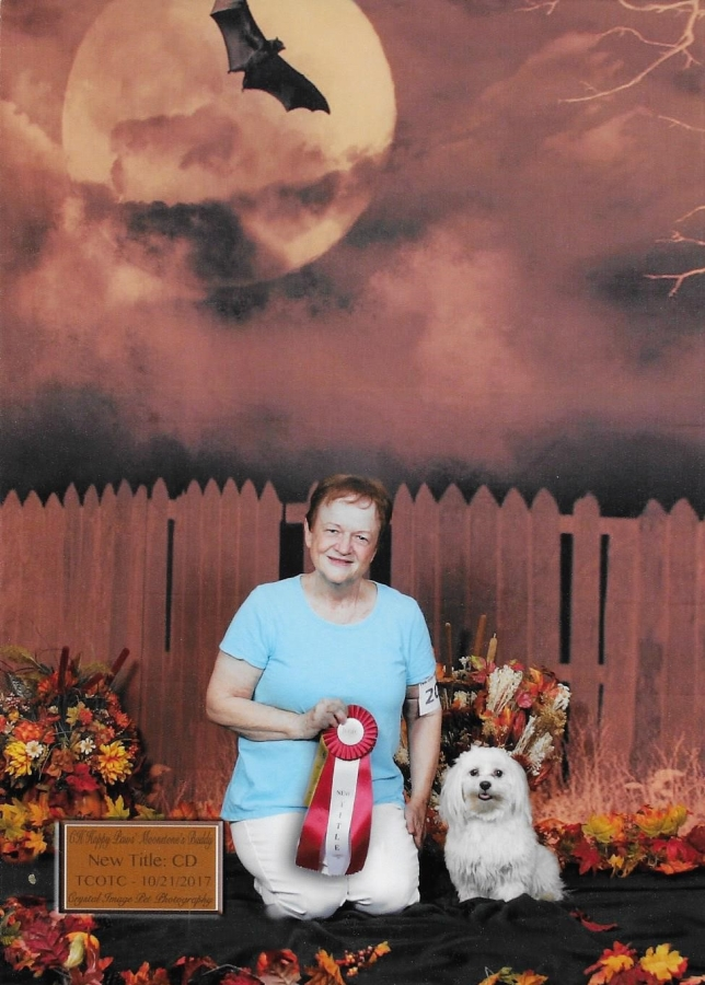Happy Paws Havanese Buddy earning his Companion Dog title with his owner, Diana St. Denis