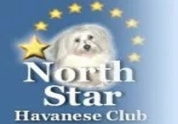 Northstar Havanese Club